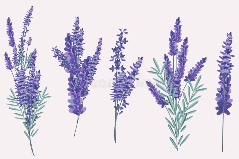 Kolekcja wektorowy rocznik wzrastał kwiaty w bukietach royalty ilustracja