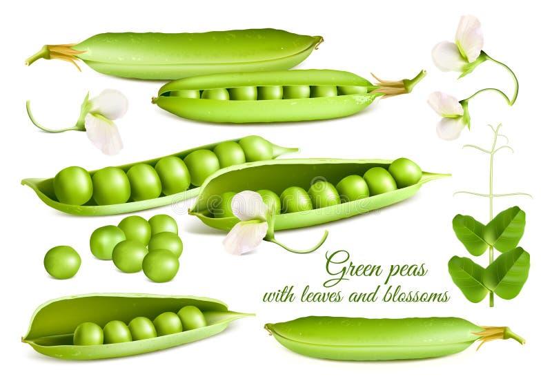 Kolekcja wektorowych ilustracj zieleni grochy ilustracja wektor