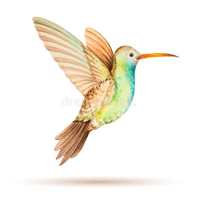 kolibri stock abbildung