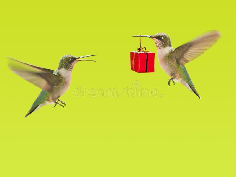 Kolibri, der ein Geschenk zu anderen trägt lizenzfreies stockfoto