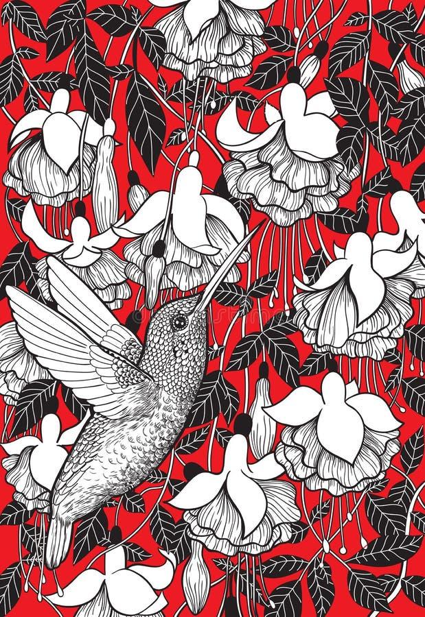 Kolibri- och fuchsiablommor stock illustrationer