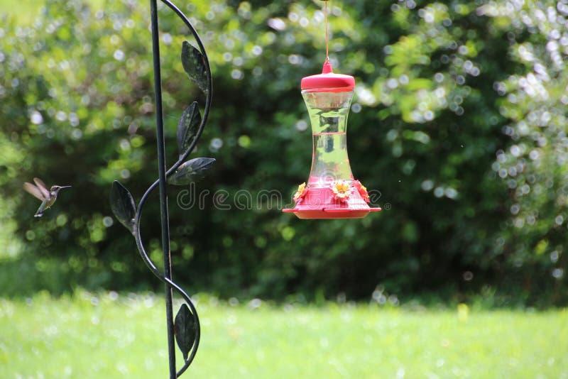 Kolibrie die aan voederaard vliegt stock foto's