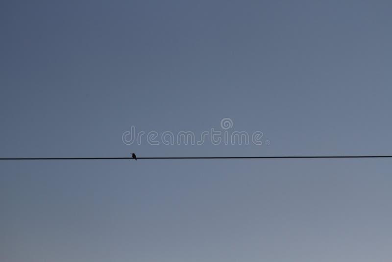 Kolibrie op een draad royalty-vrije stock afbeelding