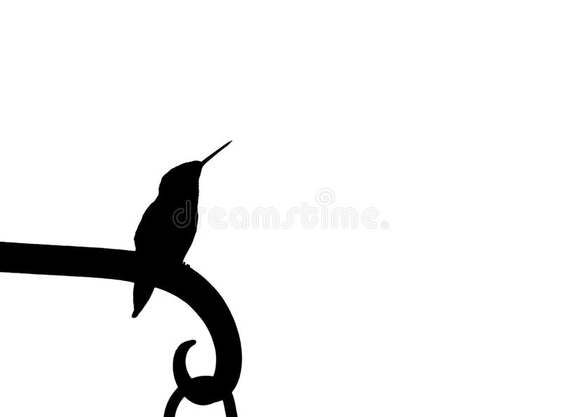 Kolibriesilhouet stock fotografie