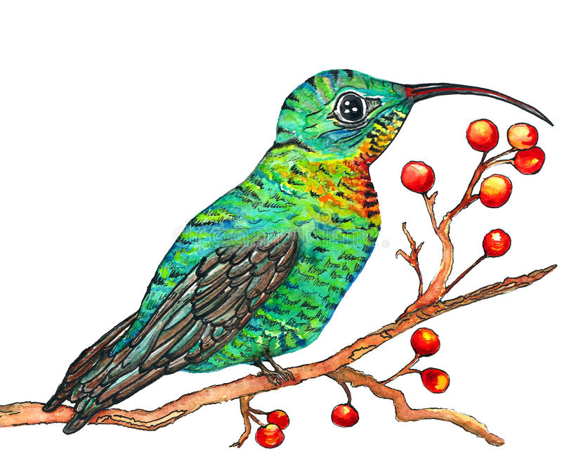 Kolibriewaterverf royalty-vrije stock foto