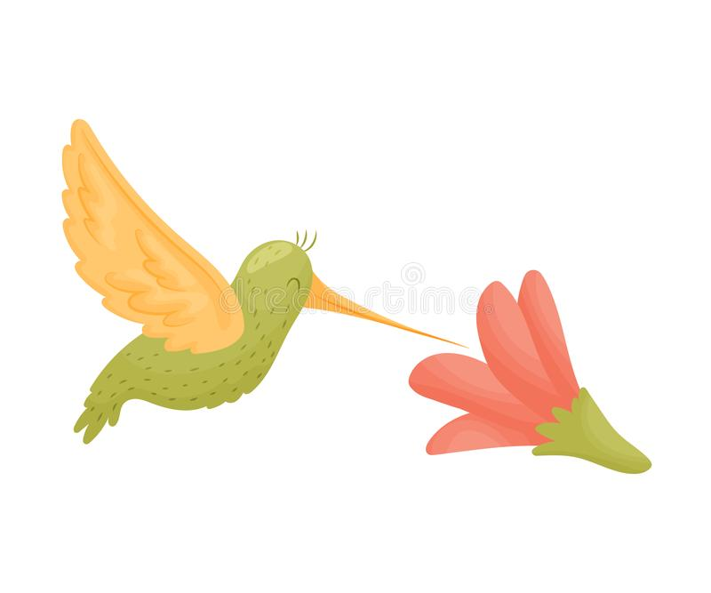 Kolibrin flyger över en blomma white f?r vektor f?r bakgrundsillustrationhaj royaltyfri illustrationer