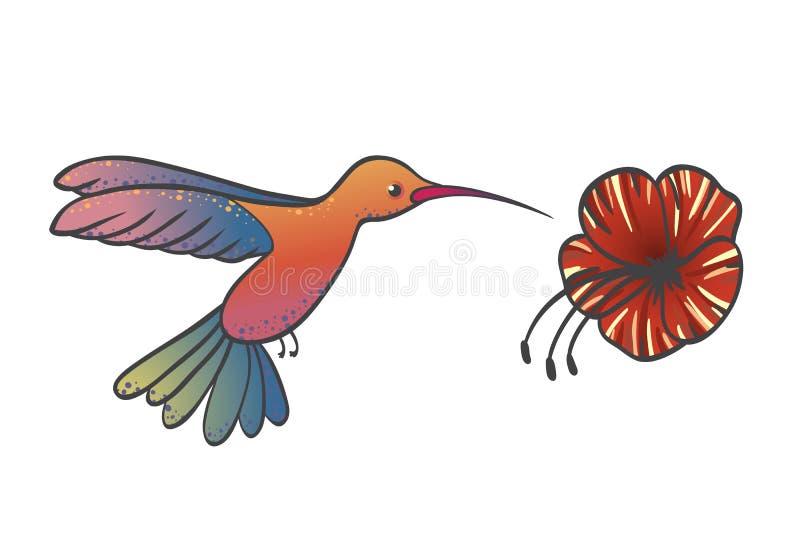 Kolibrin flyger och samlar nektar från en röd hibiskusblomma royaltyfri illustrationer