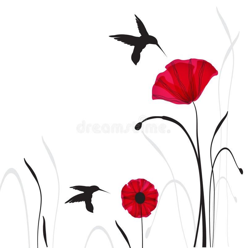 Kolibris und Mohnblumeblumen vektor abbildung