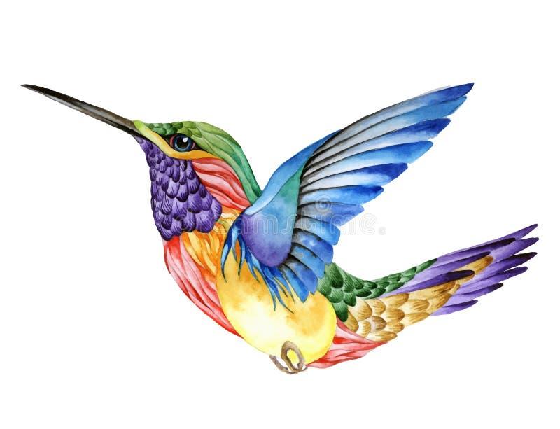 Kolibritatuering, vattenfärgmålning royaltyfri illustrationer
