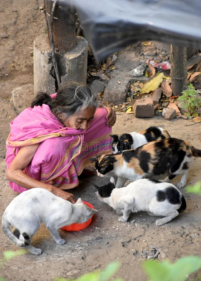 Old woman feeding cats stock photo