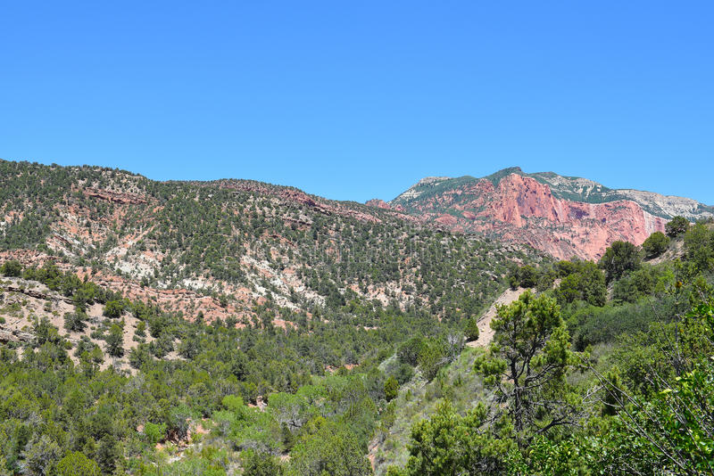 Kolob kanjoner Zion National Park royaltyfri bild