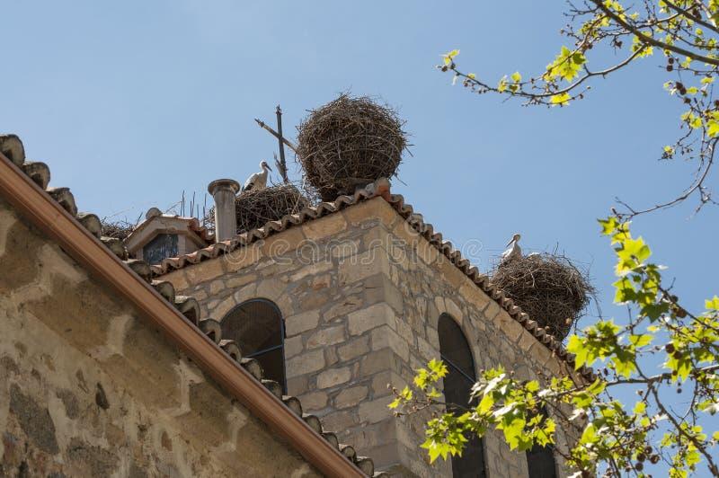 Koloni av den vita storken, Ciconiaciconia arkivfoton
