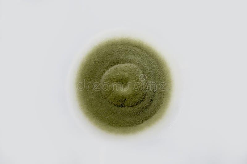 Koloni av formsvampen som odlas från inomhus luft arkivbilder
