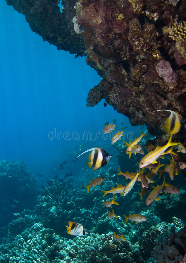 kolonia koral fotografia royalty free
