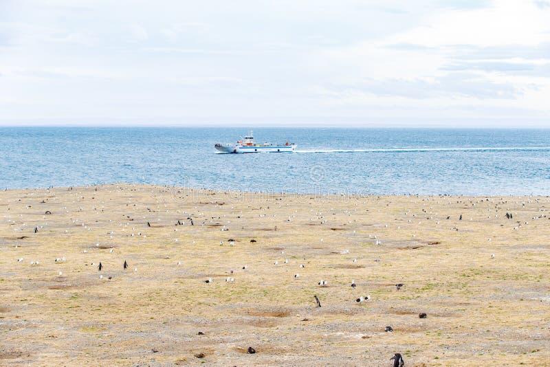 Kolonia magellanic pingwiny na Magdalena wyspie, cieśnina Magellan, Chile fotografia stock