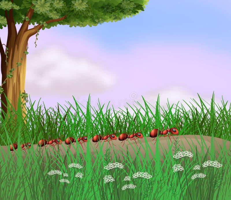 Kolonia mrówki czołgać się w drodze royalty ilustracja