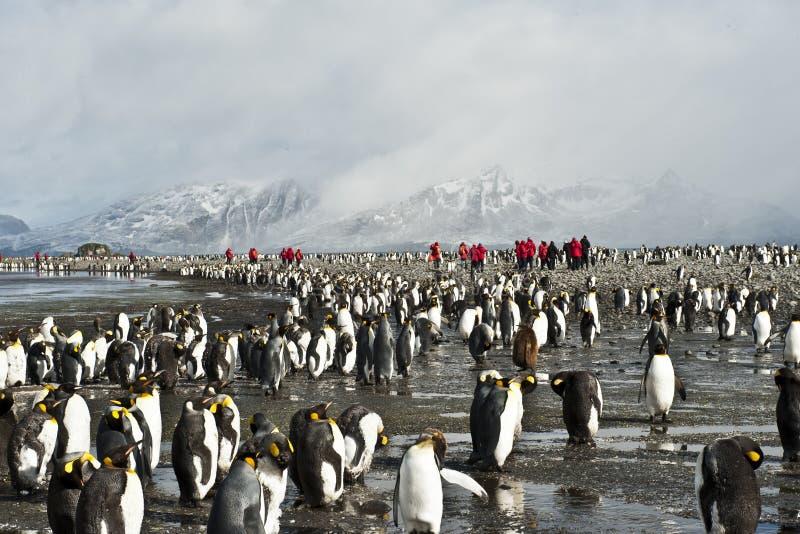 Kolonie der König-Pinguine mit menschlichen Besuchern lizenzfreie stockfotografie