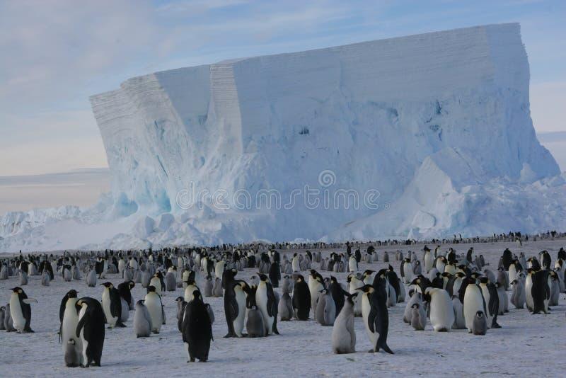 Kolonie der Kaiser-Pinguine lizenzfreie stockfotografie