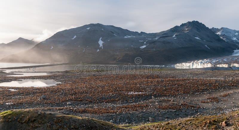 Kolonie von Küken Königs Penguin vor Ross Glacier, St. Andrews Bay, Süd-Georgia lizenzfreie stockbilder