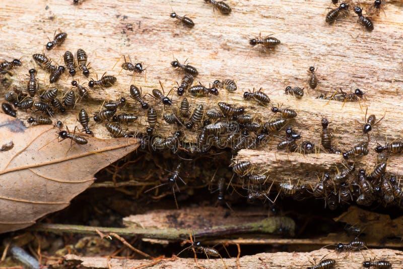 Kolonie von Termiten auf einem faulen hölzernen Klotz lizenzfreie stockbilder