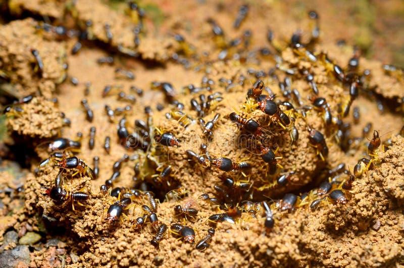 Kolonie von Termiten lizenzfreies stockfoto