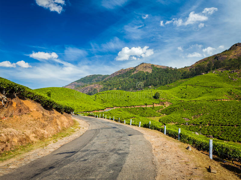 Kolonier för grönt te i Munnar, Kerala, Indien royaltyfri fotografi