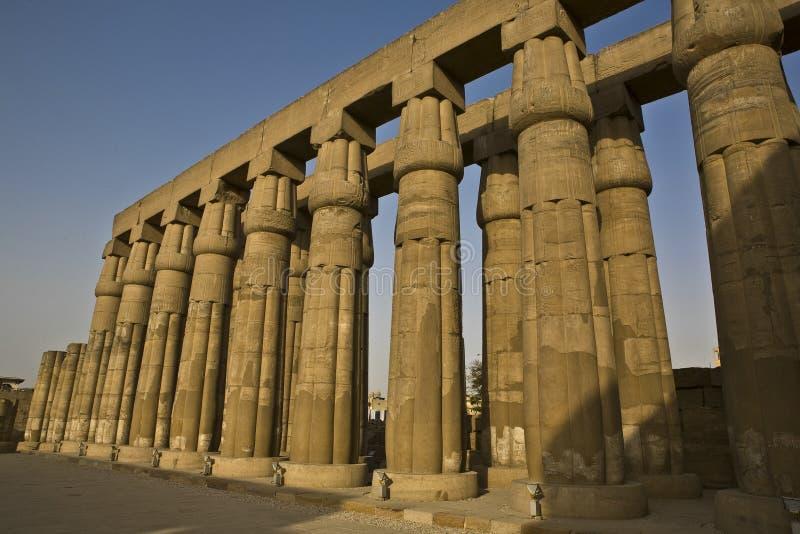 Kolonner på den Luxor templet, Egypten royaltyfria bilder