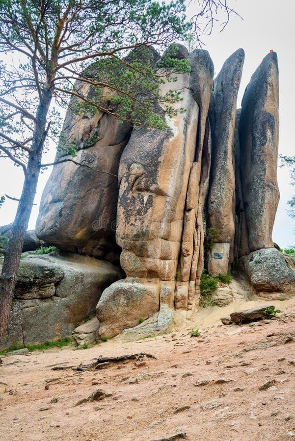 Kolonnfjädrar Rysk fristad för reservStolby natur Nära Krasnoyarsk royaltyfri fotografi