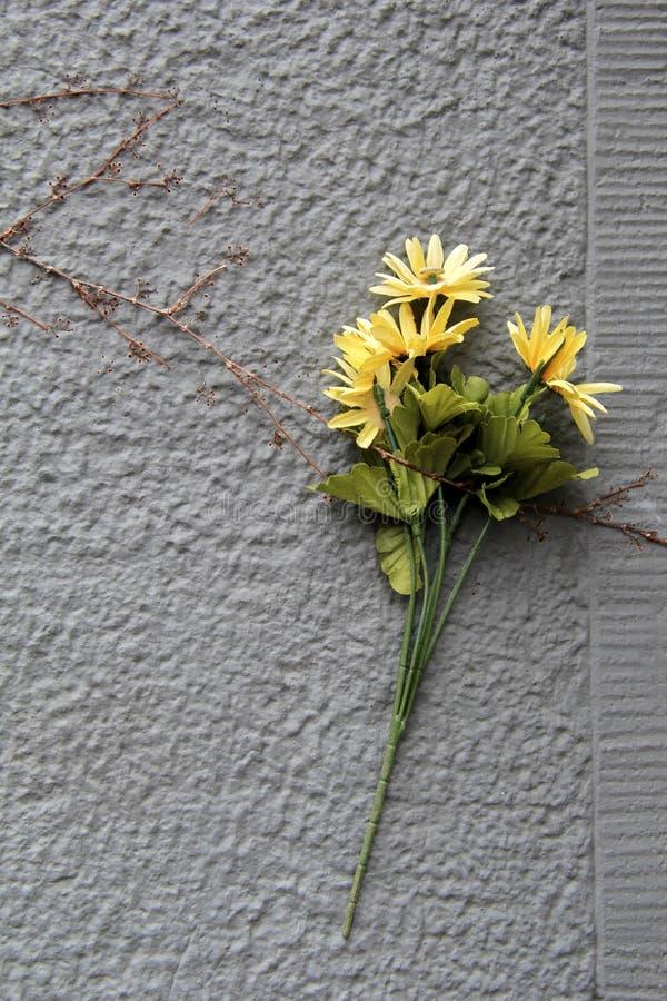 Kolorów żółtych kwiaty łapać w pułapkę pod winogradem obrazy royalty free