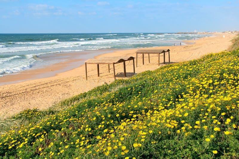 Kolorów żółtych kwiaty i plaża na morzu śródziemnomorskim. fotografia royalty free