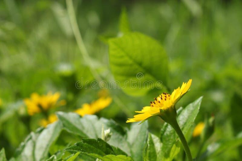 Kolorów żółtych liście w ogródzie i kwiaty zdjęcia stock