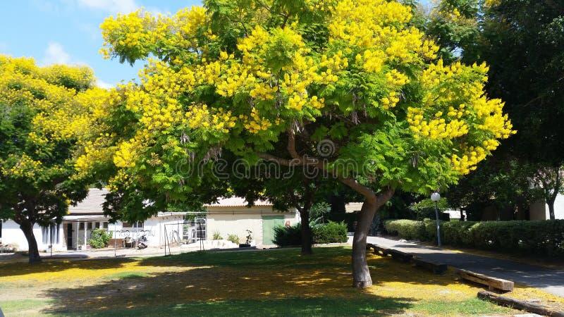 Kolorów żółtych okwitnięcia zdjęcia royalty free