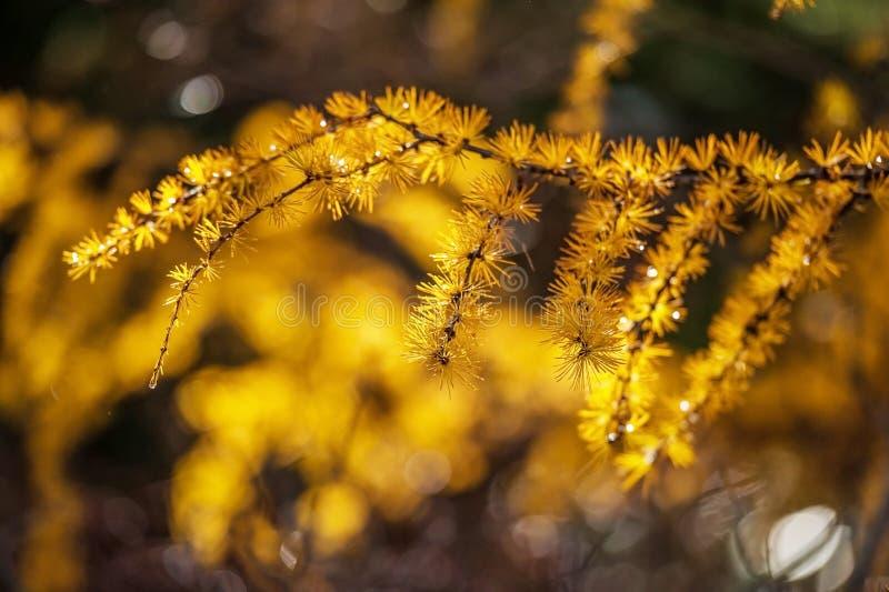Kolorów żółtych okwitnięcia fotografia stock