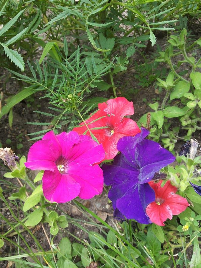 kolorów natury obrazy stock