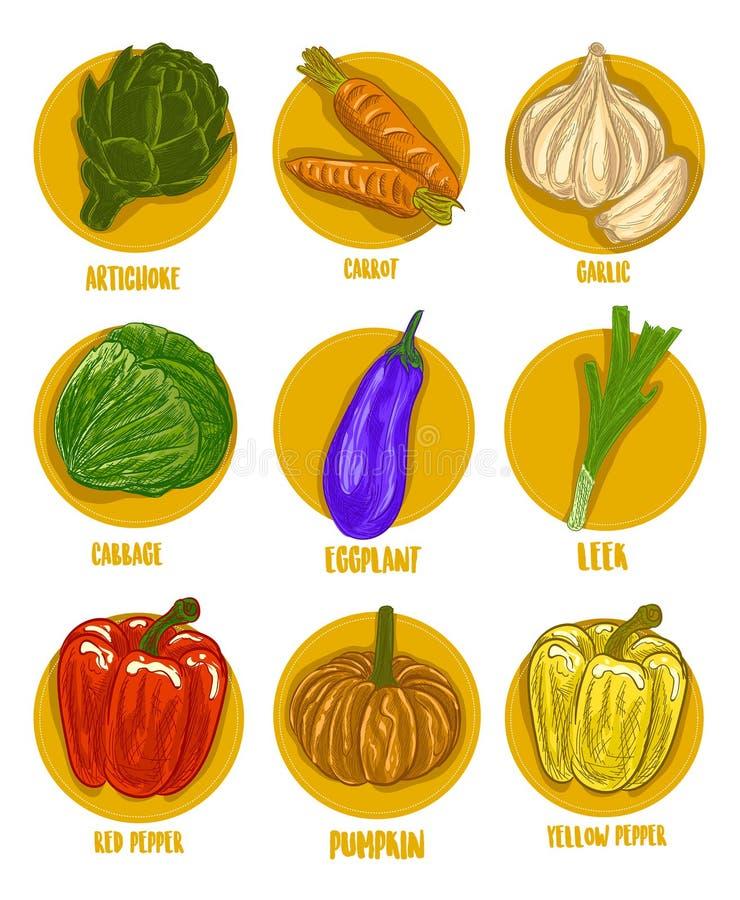 Kolorów warzyw ilustraci Wektorowy set obraz royalty free