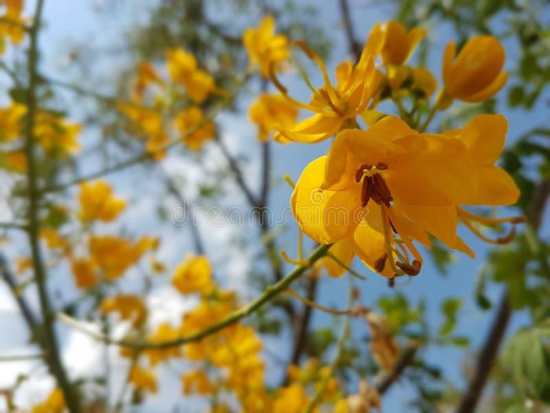 Kolor żółty kwitnie z pięknym niebieskiego nieba tłem zdjęcie stock