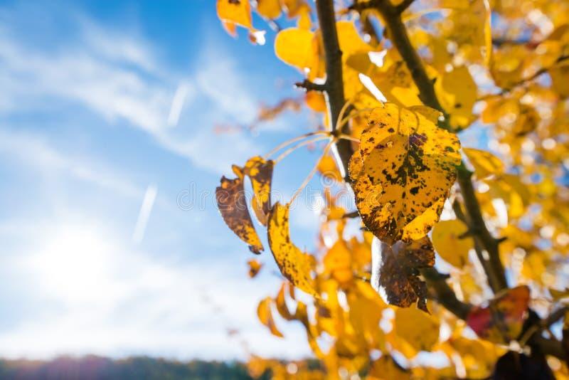 Kolor żółty farbujący opuszcza obracać czerń podczas gdy wciąż dołącza gałąź fotografia royalty free