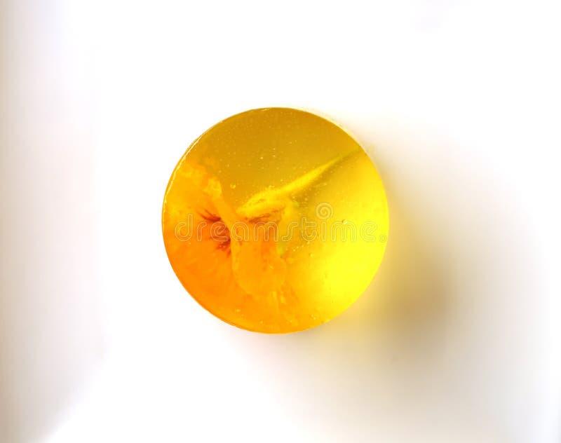 Kolor żółty galareta z nasturcja kwiatem inside na białym tle zdjęcie royalty free