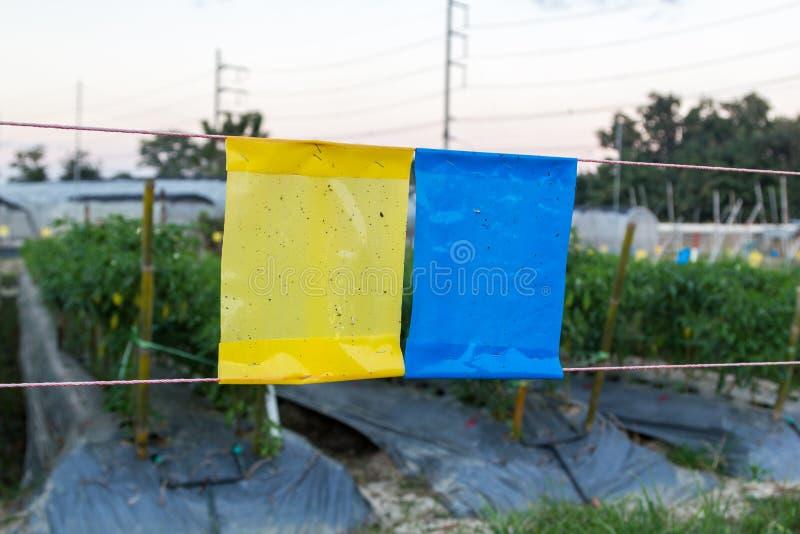 Kolor żółty i błękitny kleisty oklepiec w rolnictwa polu zdjęcia stock