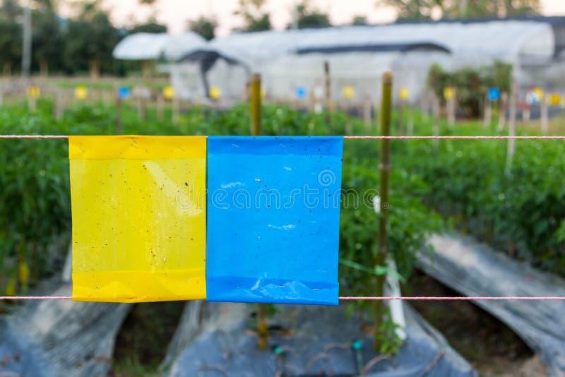 Kolor żółty i błękitny kleisty oklepiec w rolnictwa polu zdjęcie royalty free