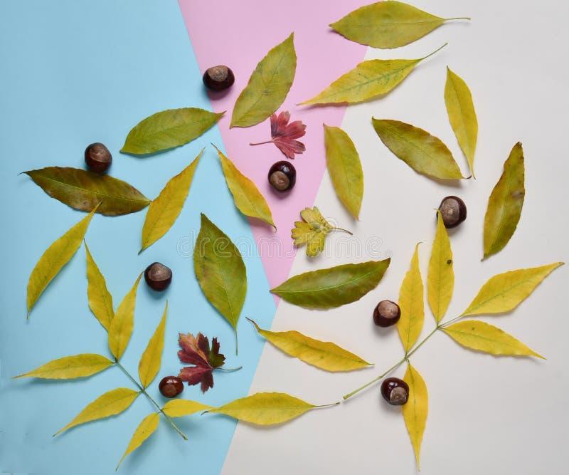 Kolor żółty i czerwień spadać liście, kasztany na stubarwnym papierowym tle jabłczanego jesień świeczek składu susi liść target24 obraz stock