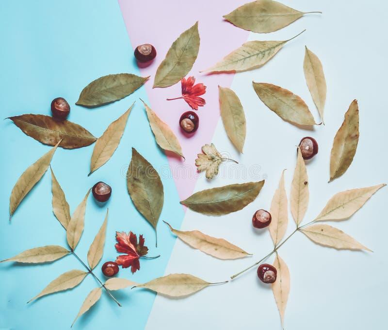 Kolor żółty i czerwień spadać liście, kasztany na stubarwnym papierowym tle jabłczanego jesień świeczek składu susi liść target24 zdjęcia stock