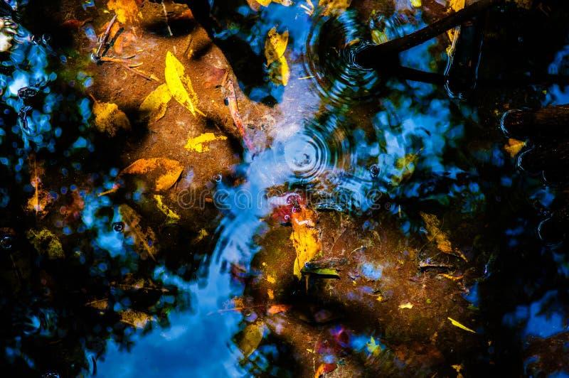 Kolor żółty i pomarańcze opuszczamy pod wodą w namorzynowym lesie zdjęcie royalty free