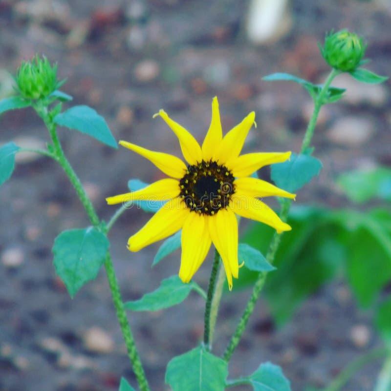 Kolor żółty jest Piękny fotografia stock