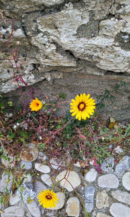 Kolor żółty kwiaty obrazy stock