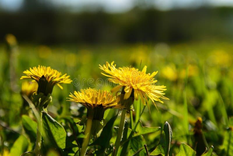 Kolor żółty kwiaty zdjęcia stock