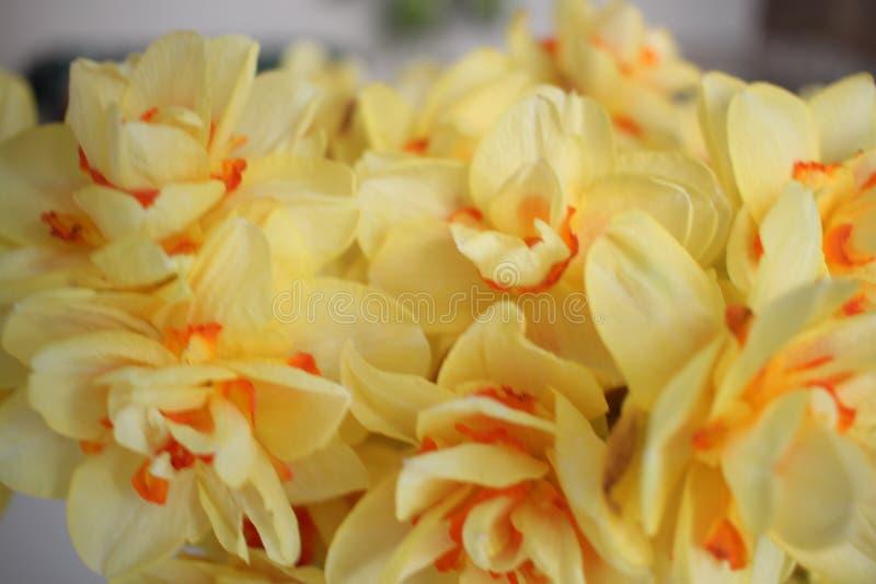Kolor żółty kwiaty obraz stock