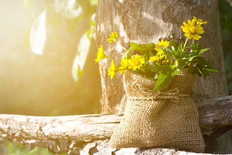 Kolor żółty kwitnie na drewnie i drzewie w naturze przy rankiem fotografia royalty free