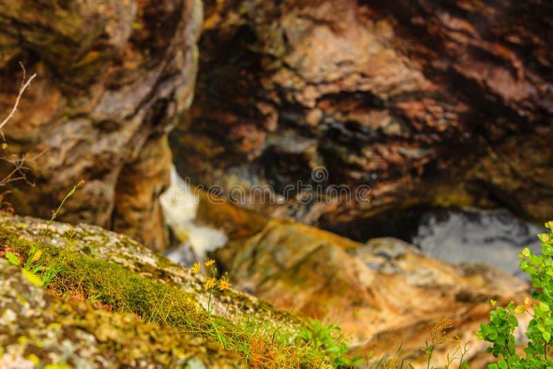 Kolor żółty kwitnie na skalistym kamiennym tle obrazy stock
