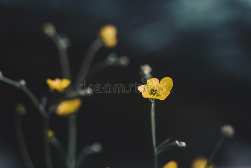 Kolor żółty kwitnie na tła bokeh zdjęcie stock